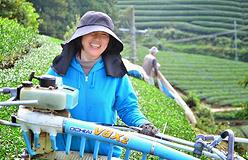 『農業女子プロジェクトコラボエッセイ~京都府東茶園 東テル子さん~カミングスーン!』